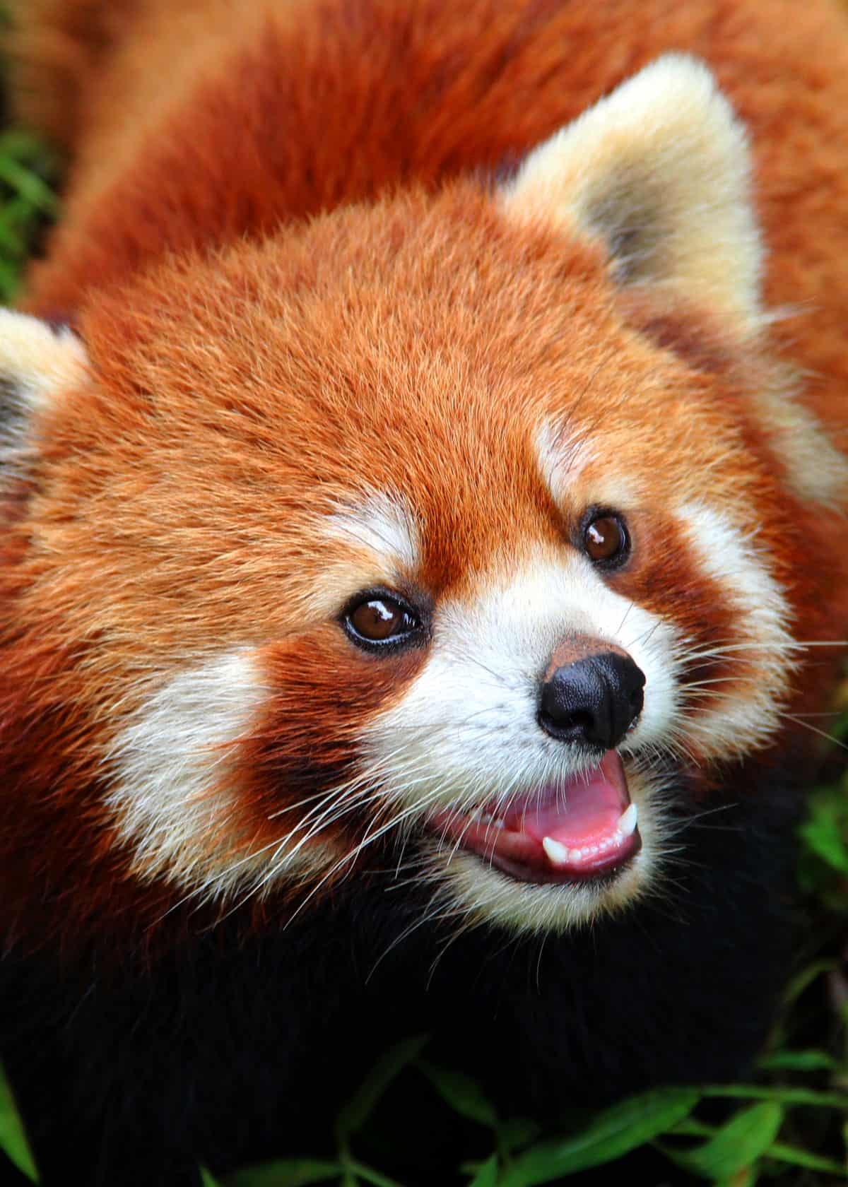 35 Most Colorful Animals In The World Mammals Birds Insects Reptiles Everywhere Wild