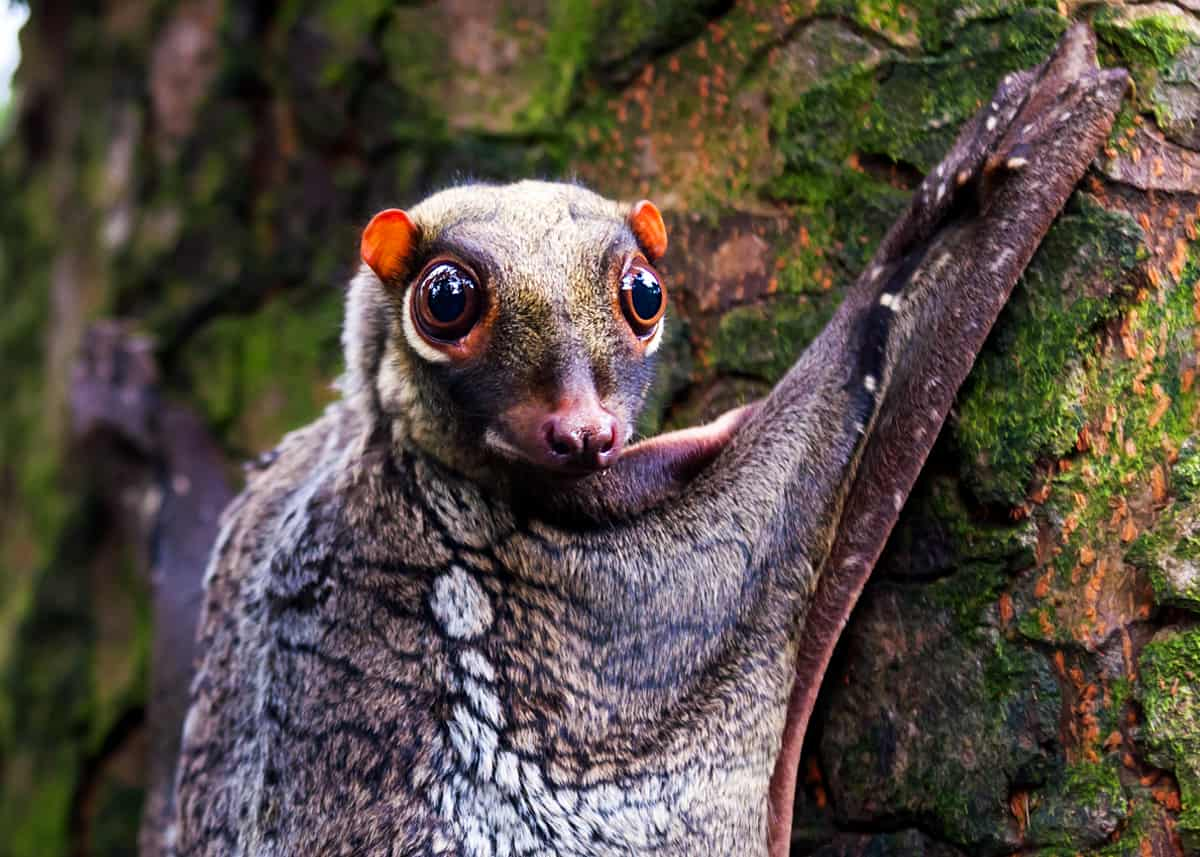 69 Strange, Cool, and Weird Animals: Mammals, Reptiles, Insects ...
